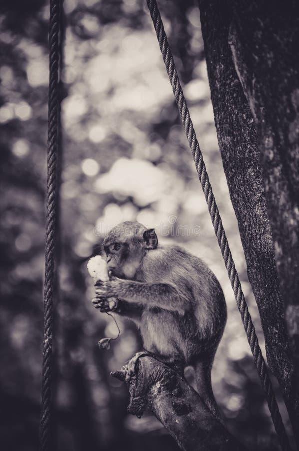 Macaque muito novo que come em uma árvore imagem de stock royalty free
