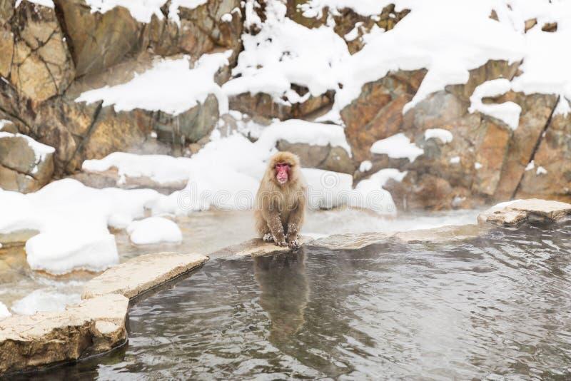 Macaque o mono japonés de la nieve en aguas termales fotografía de archivo libre de regalías