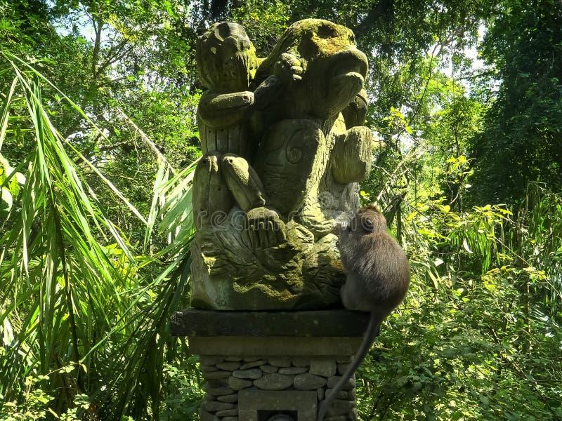 Macaque op aapstandbeeld bij het bos van de ubudaap, Bali stock foto