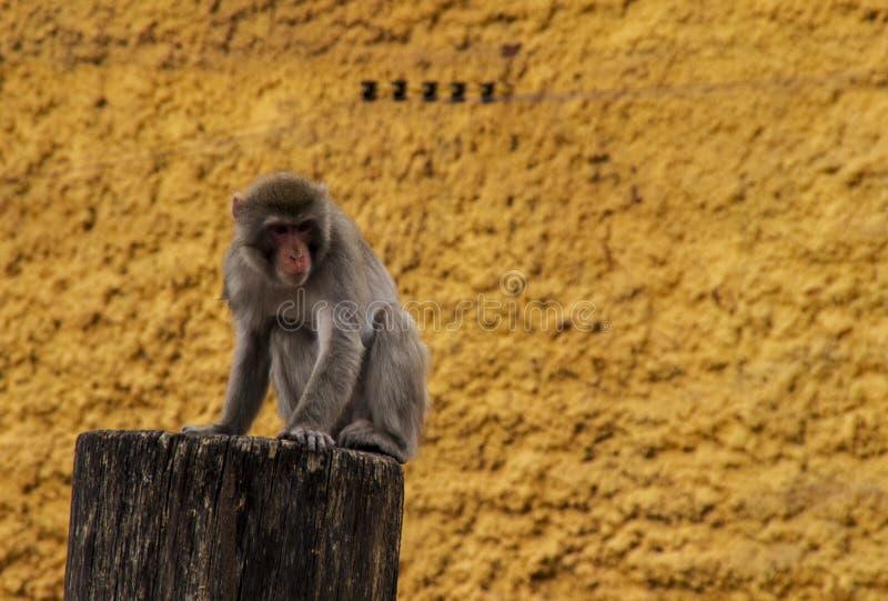 Macaque op stomp stock fotografie