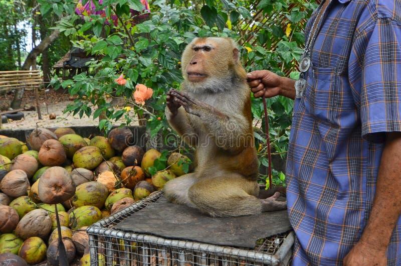 Macaque pedido para acoger con satisfacción al visitante en Tailandia imagen de archivo