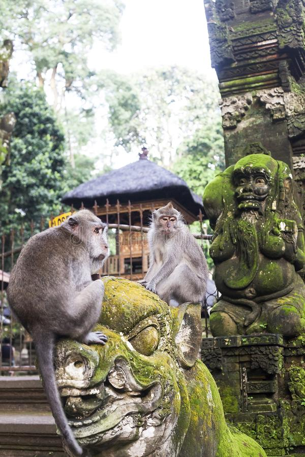 Macaque que se sienta en la estatua vieja cerca del templo hindú, bosque del mono de Ubud fotos de archivo