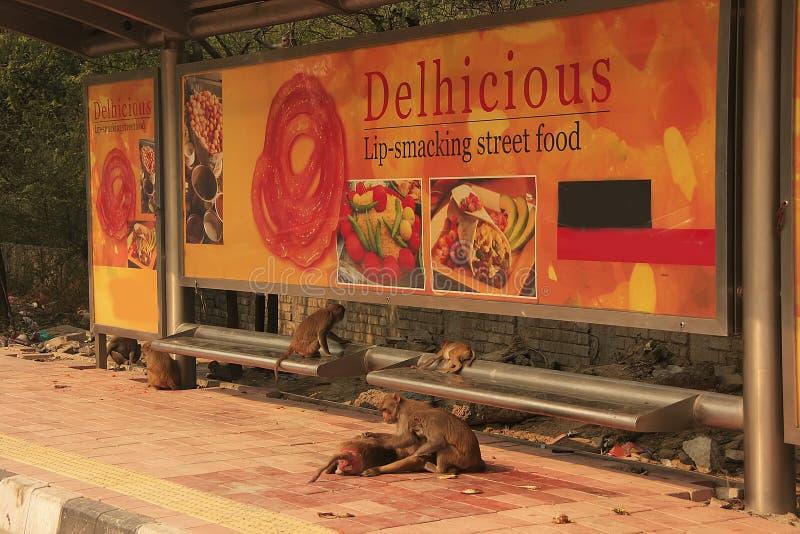 Macaques del macaco de la India que juegan en una parada de autobús, Nueva Deli imagen de archivo libre de regalías