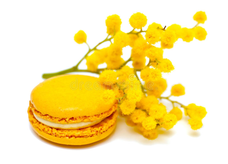 Macaron and mimosa. Composition of yellow macaron and mimosa on white background stock photography