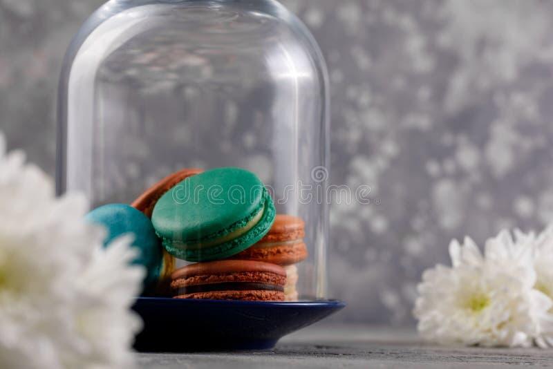 Macarons multicolores sous le dôme en verre et les fleurs blanches des chrysanthèmes sur un fond gris Macarons sensibles de macar photographie stock libre de droits