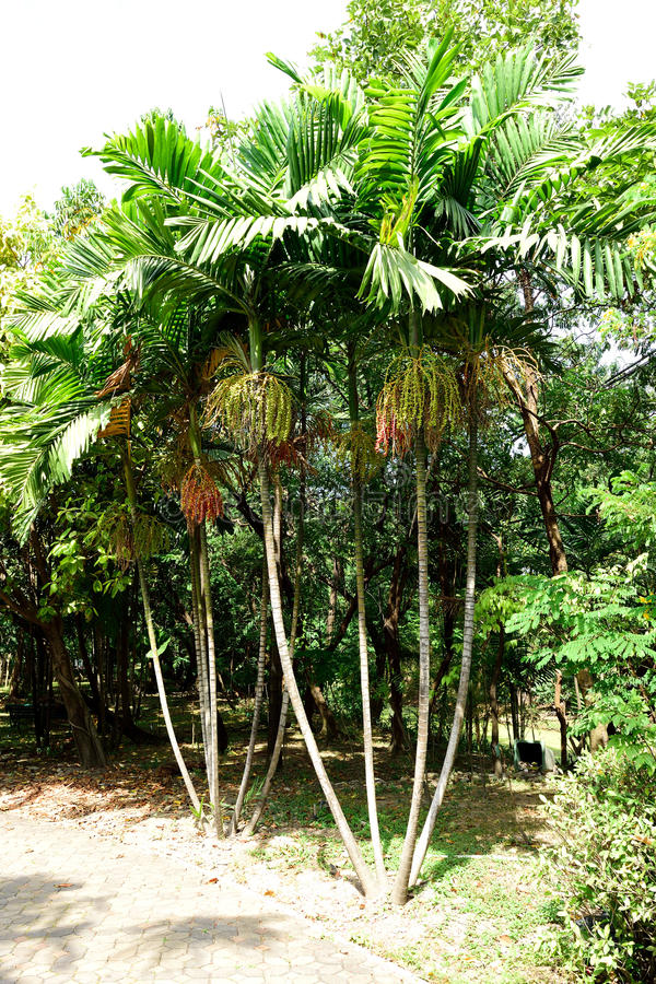 Free Macarthur Palms Stock Image - 74749541