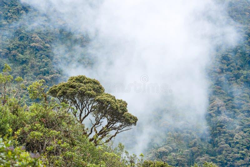 Macas, Anden ecuador stockfotografie