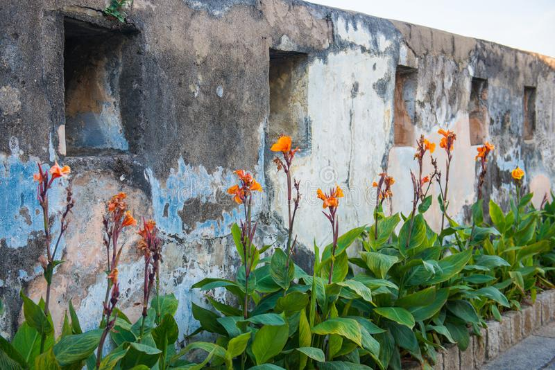 Macau - January 15, 2018 :Old wall with flower on top at the For stock photography