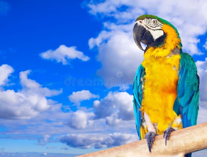 Macaw ενάντια στον ουρανό στοκ εικόνα