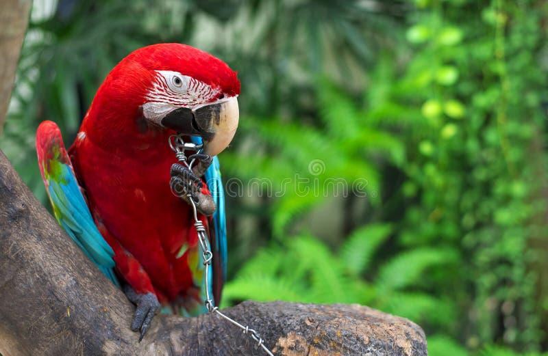 macaw royalty-vrije stock fotografie