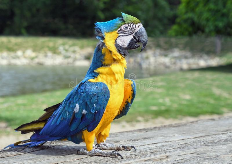 Πουλί, παπαγάλος, Macaw, πανίδα στοκ εικόνα