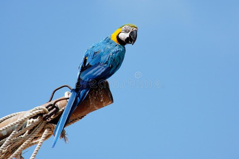 macaw стоковые изображения