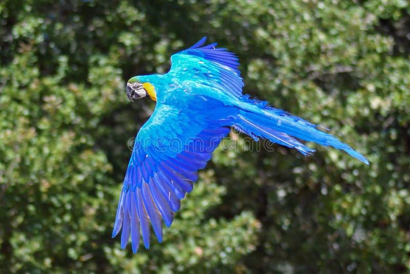 Πουλί, Macaw, παπαγάλος, ράμφος στοκ εικόνες