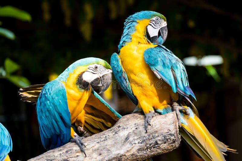 macaw stock fotografie
