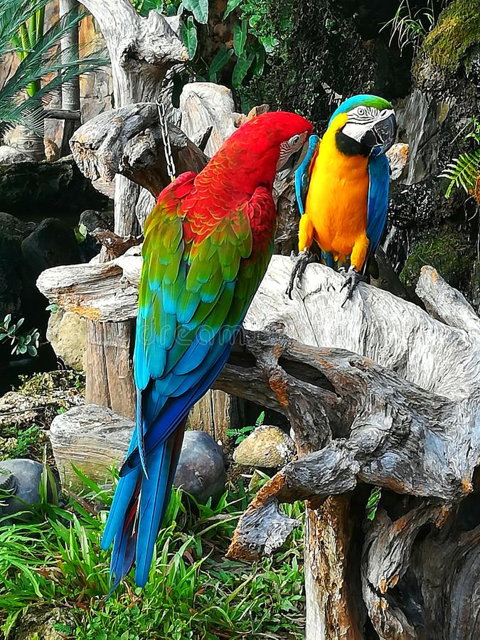 macaw royalty-vrije stock foto