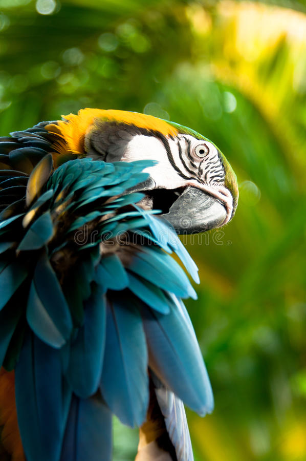 macaw στοκ φωτογραφία με δικαίωμα ελεύθερης χρήσης