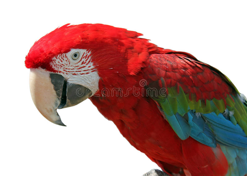 Download Macaw stock photo. Image of background, feathered, bird - 20468040