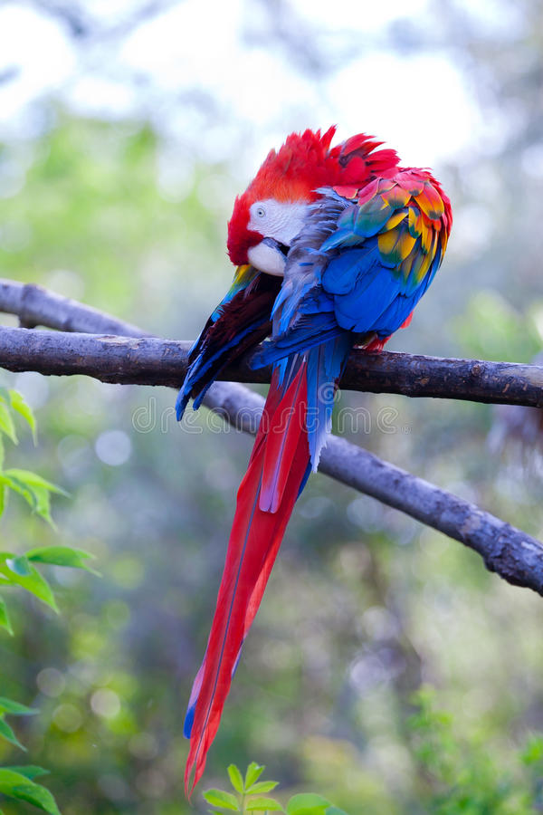 Download Macaw Stock Images - Image: 23207564