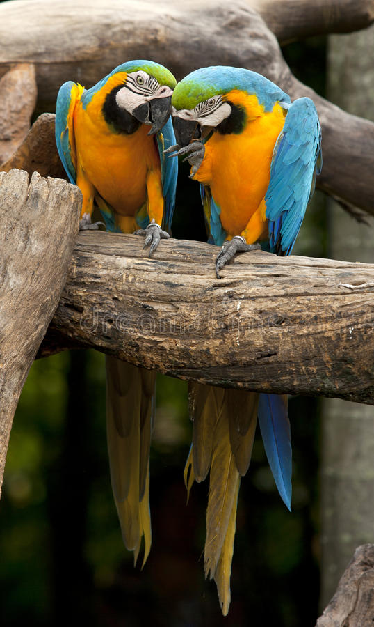 Macaw. On the nature background royalty free stock photography
