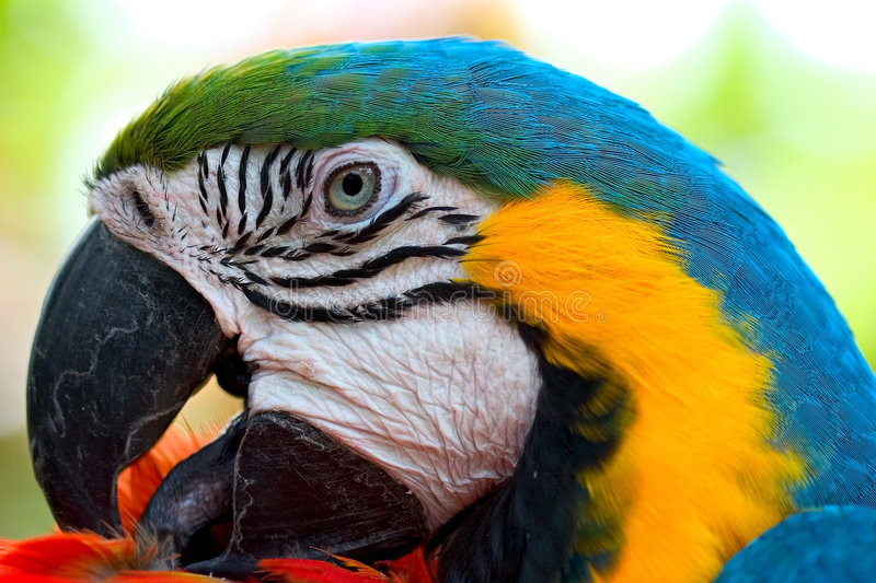 Macaw. Taken in hawaii stock photography