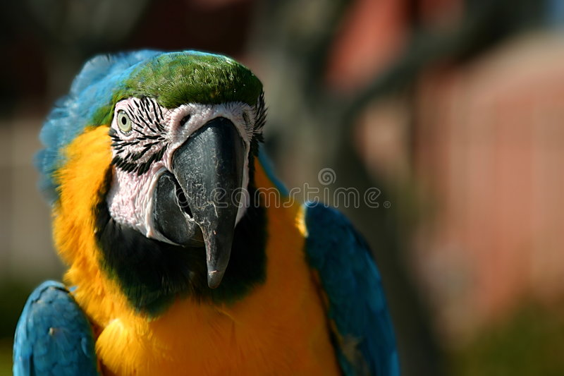 Macaw (3263) images stock