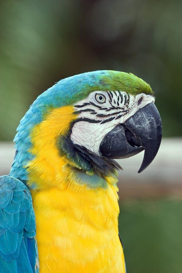 Free Macaw Stock Image - 3701941