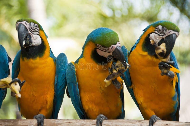 Macaw. στοκ φωτογραφία με δικαίωμα ελεύθερης χρήσης