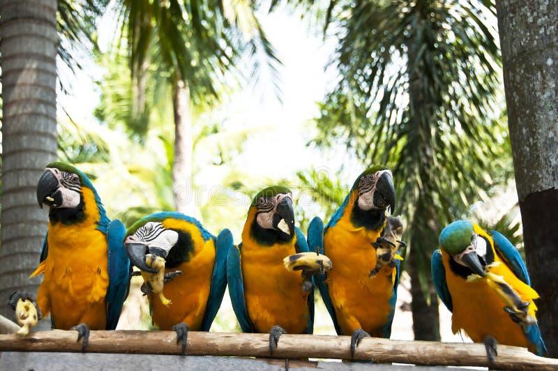 Macaw. στοκ εικόνα με δικαίωμα ελεύθερης χρήσης