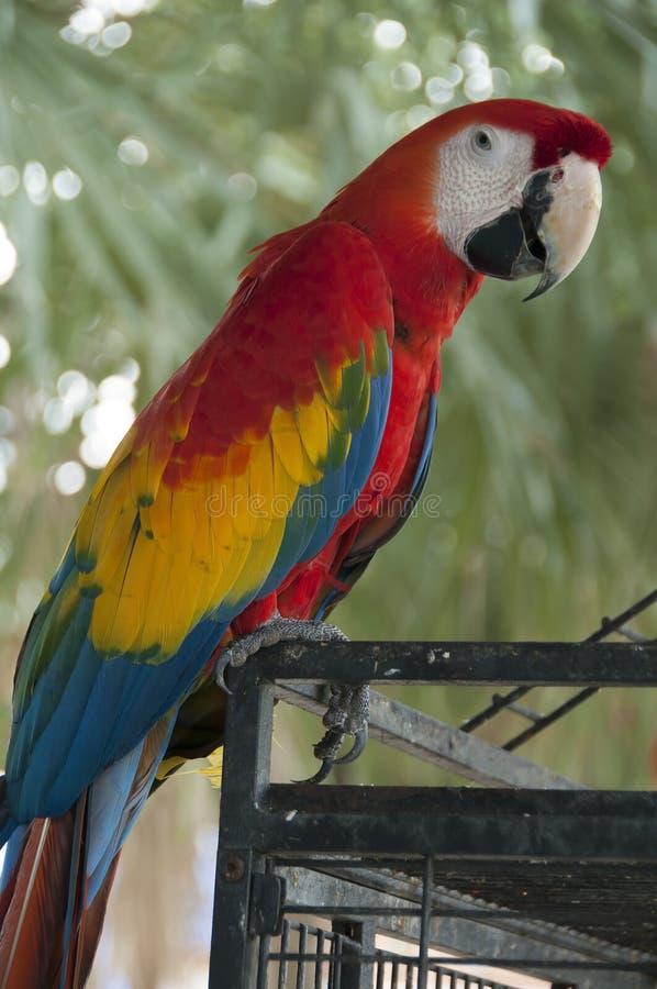 macaw στοκ εικόνα