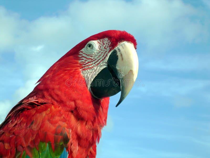 Download Macaw стоковое изображение. изображение насчитывающей ноги - 486465