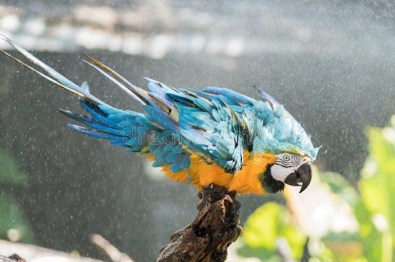 macaw fotos de stock royalty free