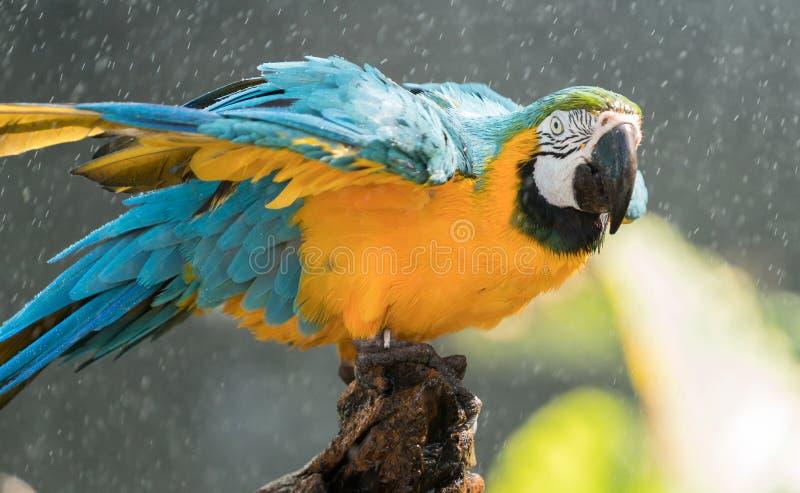 macaw imagem de stock