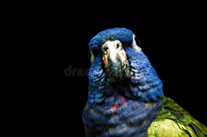 macaw imagem de stock royalty free