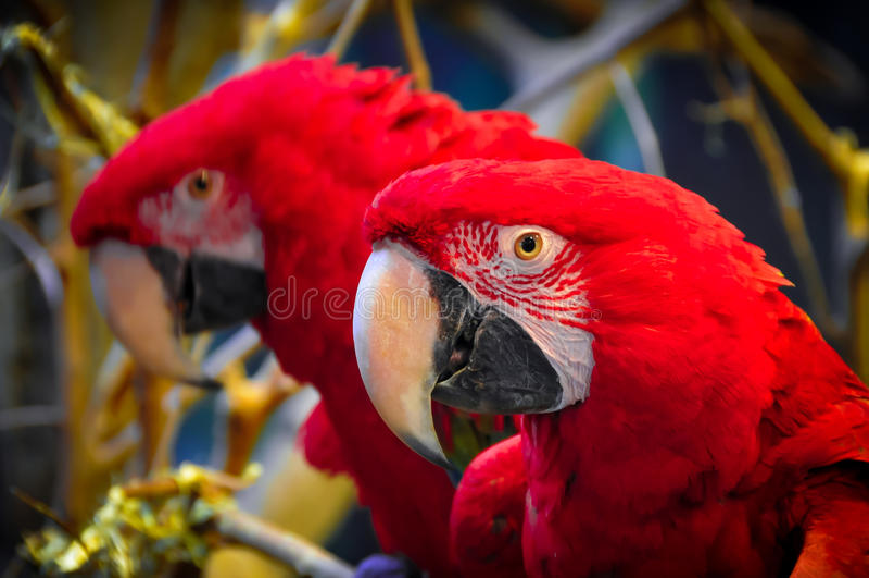 macaw royalty-vrije stock afbeeldingen