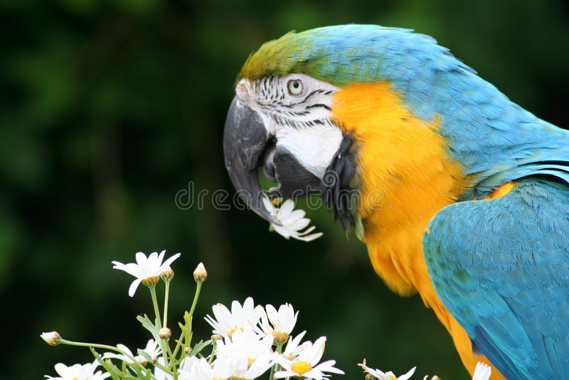 Macaw fotografia de stock