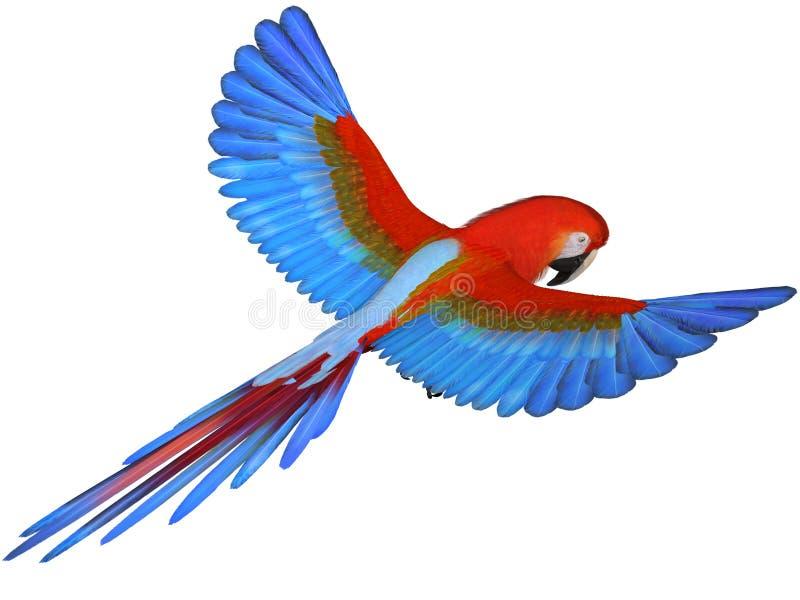 macaw απεικόνιση αποθεμάτων