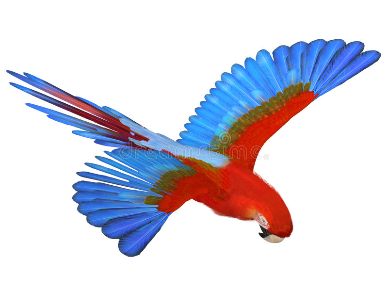 macaw ελεύθερη απεικόνιση δικαιώματος