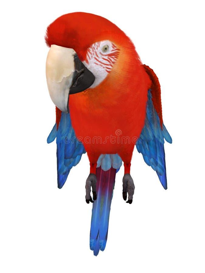 macaw illustration de vecteur