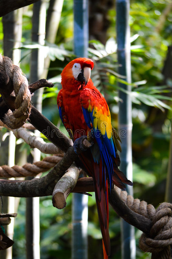 Free Macaw Royalty Free Stock Photography - 90638777