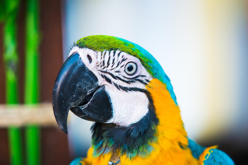 macaw royalty-vrije stock foto's