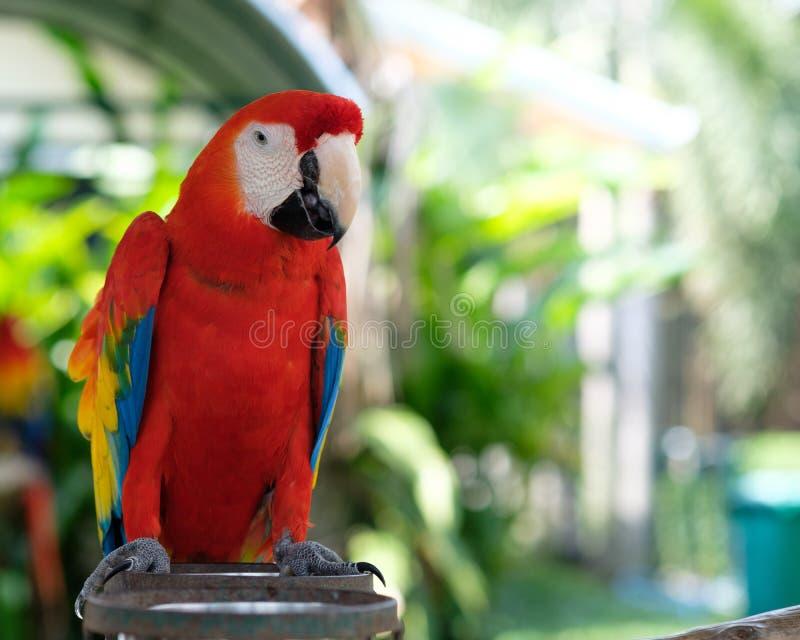 macaw stock afbeeldingen