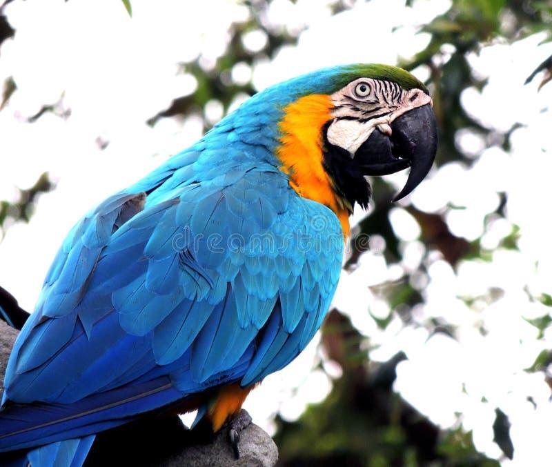 Πουλί, παπαγάλος, Macaw, ράμφος στοκ εικόνα με δικαίωμα ελεύθερης χρήσης