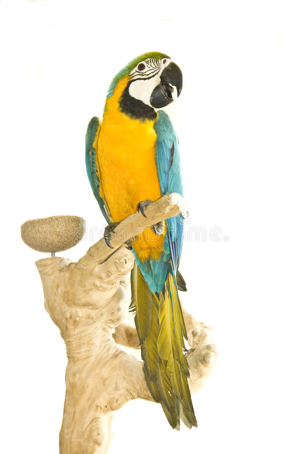 Macaw auf Papageienstandplatz stockfotos
