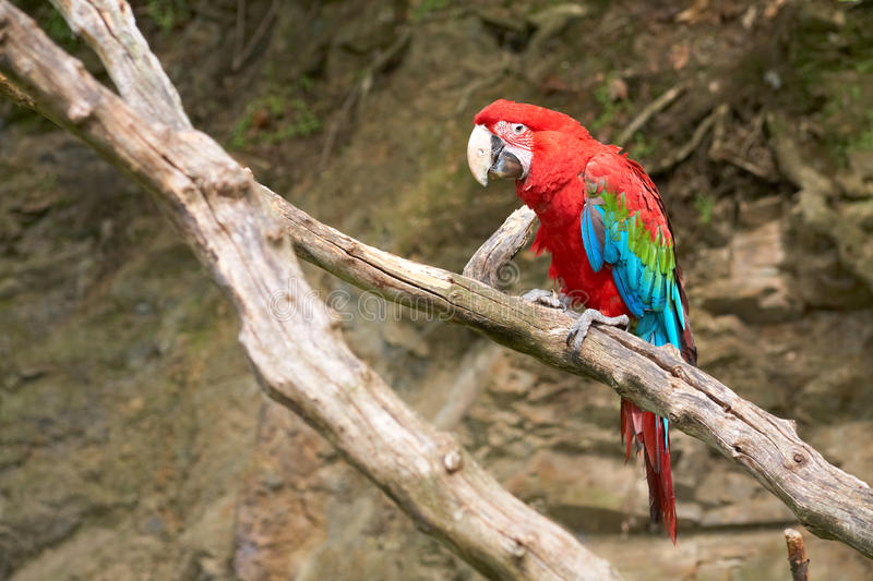 Macaw on the branch. In zoo royalty free stock photos