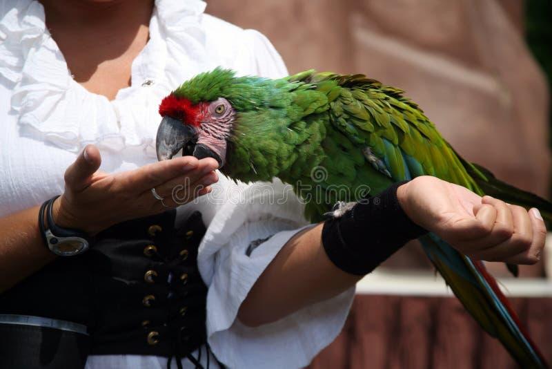 Macaw com instrutor fotografia de stock royalty free