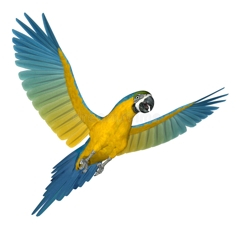 Macaw de bleu et d'or pilotant 2 illustration stock