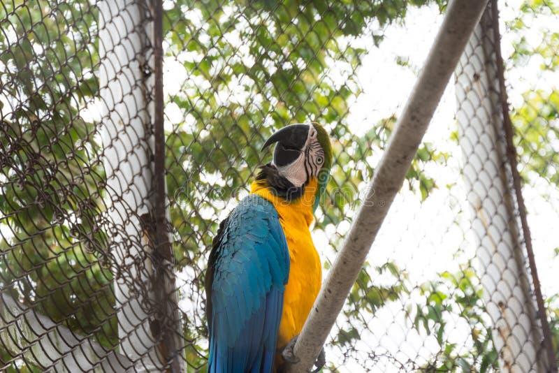 Macaw en el parque zoológico fotos de archivo