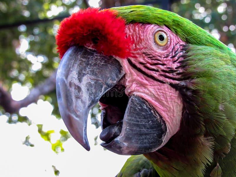 Macaw en pajarera fotos de archivo libres de regalías