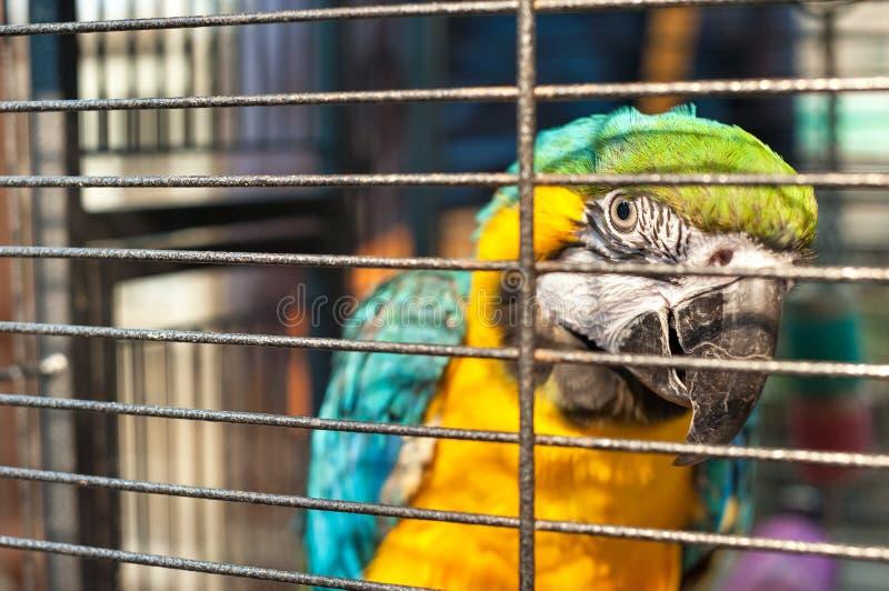 Macaw enjaulado en el mercado del pájaro de Yuen Po Street, Mong Kok, Hong Kong imágenes de archivo libres de regalías