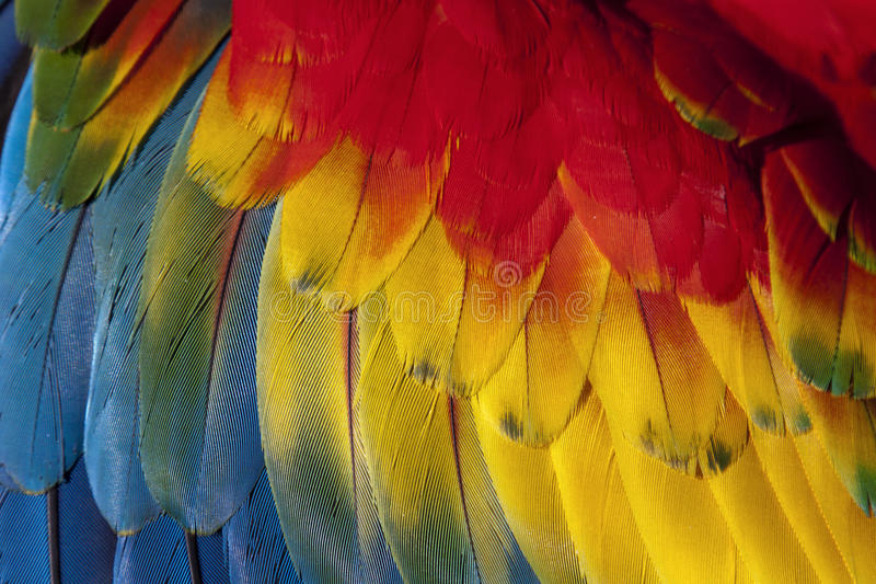 Macaw feathers royalty free stock photography